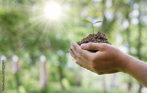 Farmer hands planting the seedlings into the soil.
