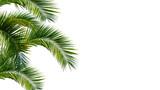 palme, palmwedel, palmblätter vor weißem hintergrund - 150890015