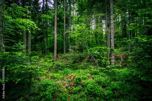 Fotobehang Groene Summer forest