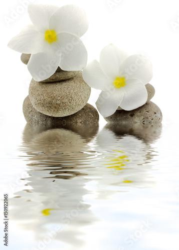 Foto op Canvas Zen fleurs blanches de frangipanier sur galets, fond blanc