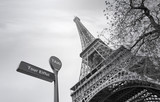 Eiffel Tower or Tour Eiffel in Paris in Spring, black and white picture