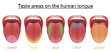 Taste areas of the human tongue - sweet, salty, sour, bitter and umami - with colored regions of the appropriate taste buds. Isolated vector illustration on white background. - 150999424