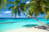 coco palms on tropical paradise beach with turquoise blue water and blue sky - 151007285