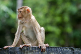Wild monkey sitting on concrete chair in forest of national park of Thailand