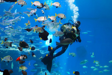 diver is feeding fishes in the Shark Pool of Coral World Underwater Observatory aquarium in Eilat, Israel.