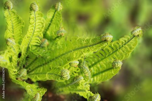 Poster Landschappen Where the green fern grows…opt.3