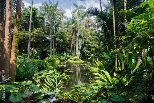 Small pond in the Singapore Botanic Gardens Poster
