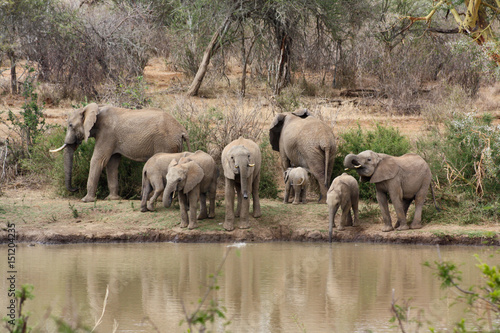 Elephant herd by a river Poster