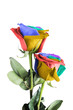 Coloful roses isolated