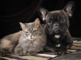 Cute dog and cat lie together on the floor. Friendship Pets. The dark background