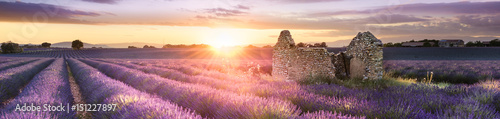 PANORAMIC LAVENDER IN SOUTH OF FRANCE