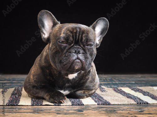 Keuken foto achterwand Franse bulldog Sleepy dog lying on the floor. The dark background
