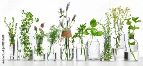 Fototapeta Bottle of essential oil with herbs