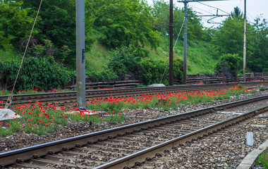 Poppies are the flowers of the tracks