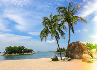 Singapore travel - Beach with palm tree in Sentosa island.