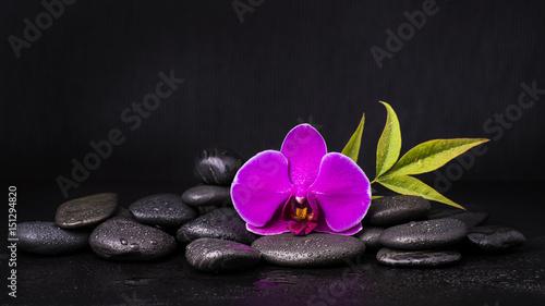 orchidea con sassi neri