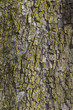 bark on a tree - 151456485