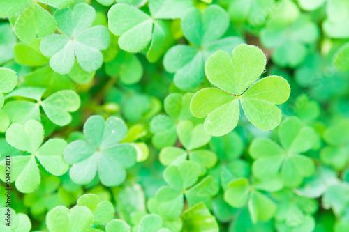 Green leaves, fresh in moring backgroud concept - 151472803