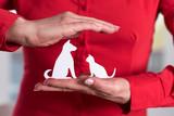 Concept of pet insurance