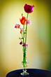 Spring flowers in a vase. Optical filter.