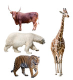 group of four large animals isolated on white