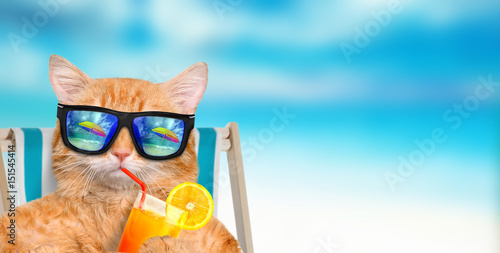 Fototapeta Cat wearing sunglasses relaxing sitting on deckchair in the sea background.