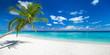 Leinwanddruck Bild - coco palm panorama wide format on tropical paradise dream beach