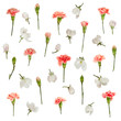 Red carnations white apple flowers floral pattern isolated on white background - 151584608