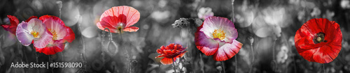 summer meadow with red poppy - 151598090
