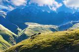 Horses graze on alpine pasture