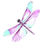 Watercolor color dragonfly drawing - 151620447