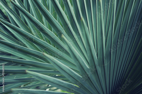 Real tropical leaves background, jungle foliage - 151681052