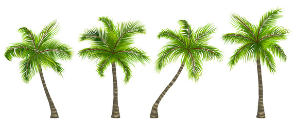 Set Realistic Palm Trees Isolated on White Background