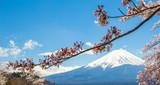 Mountain Fuji and Cherry Blossom in Japan Spring Season, Sakura season time
