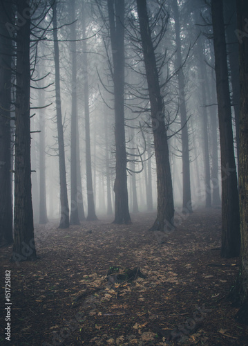 Canvas Betoverde Bos Mysterious dark old forest with fog in the Sintra mountains in Portugal
