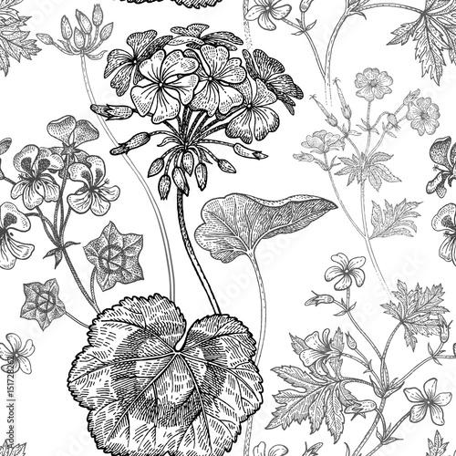 Geranium flowers. Seamless floral pattern. - 151728262