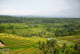 Amazing rice terrace field