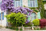 Glycine sur façade de maison - 151794864