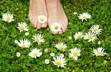 healthy feets, gesunde Füße auf Blumenwiese, barfuß, Margariten, Gänseblümchen, Textraum, copy space