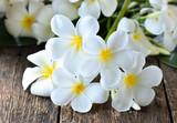 white plumeria frangipani on wooden background