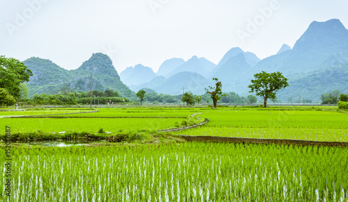 Fotobehang Lime groen Rice fields and mountains background scenery