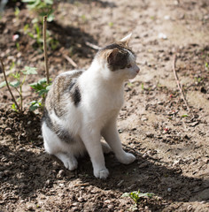 Cat walks on nature in the spring
