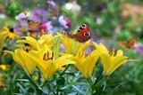 Blumen 785
