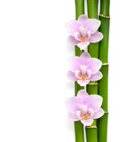 Three pink orchids and branches of bamboo lying on white. Isolated background. Viewed from above.