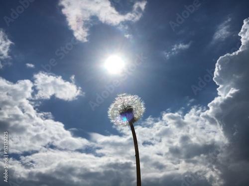 Fotobehang Paardebloemen Pusteblume vor Sonnenhimmel