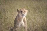 Female Lion, Serengeti
