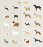 dog breed vector illustration flat design set