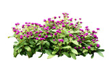 flower bush tree isolated with clipping path - 152237696