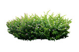 flower bush tree isolated with clipping path - 152237840