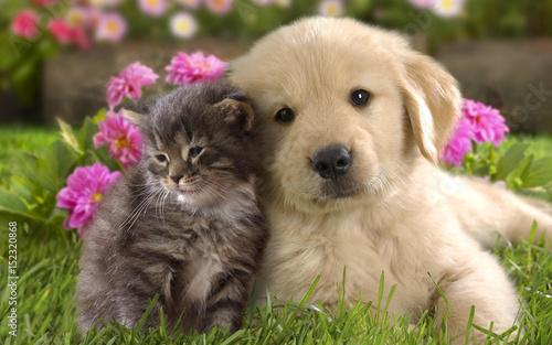 Fototapeta Puppy. Kitten.